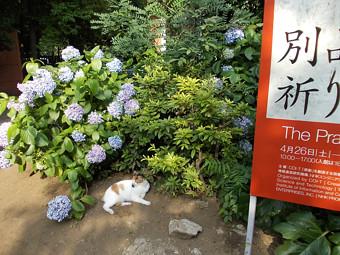 芸大の猫.jpg
